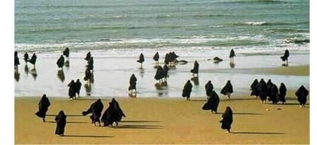 Pingouines